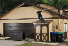 World Greatest Skateboarding Quarantine